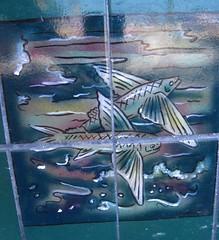 Flying Fishes (St. Blaize) Tags: santacatalina catalinatile