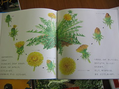 Dandelion book (inside 2)