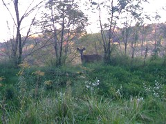DEER IN MY BACKYARD IN PA. (chaz71) Tags: family grandma sea baby fish snow tara grandpa chas worlddeer