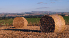 Cheviots Hills - between the Bales (billtam) Tags: blue trees sky colour green clouds canon landscape scotland harvest straw september hills fields bales 2007 cheviot a620 scottishborders scotlandscountryside
