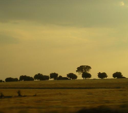 Arboles de La Mancha