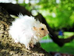 Pucio's first ever Day Out (pyza*) Tags: boy pet cute animal outdoors rodent time sweet good critter first hamster ever syrian hammie pucio chomik onephotoweeklycontest