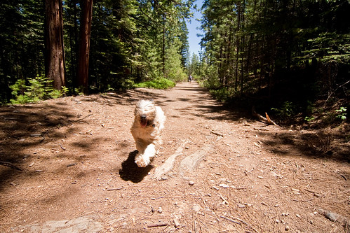 Run Dog, Run