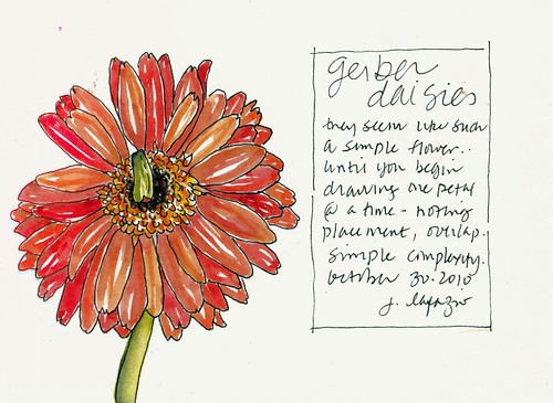 gerber daisies
