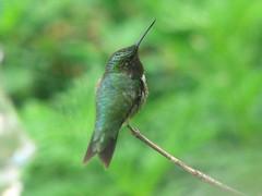 Male hummer pr ofile
