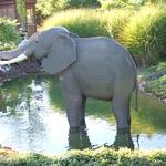 Elefant thumbnail