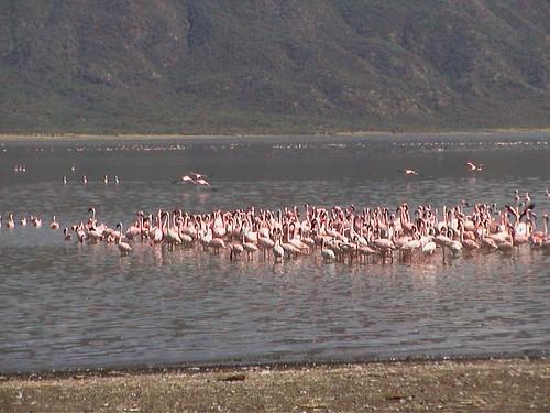 LB More Flamingos2