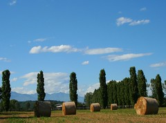 Country  & My Mountains (! .  Angela Lobefaro . !) Tags: trip travel vacation sky italy mountains nature topf25 leaves countryside interestingness topf50 quality patterns country gimp himmel explore campagna piemonte cielo nubes linux cypress bales chateau schloss frontpage ubuntu idyllic piedmont castillo chateaux allrightsreserved burg italians haybales outstanding kubuntu rotoballe digikam explored i500 cesvi natuzzi xti bestphotosonflickr 25faves biellese artlibre bestpicturesonflickr superaplus aplusphoto holidaysvacanzeurlaub angiereal 200750plusfaves theunforgettablepictures noqualitynocry maxgreco angelalobefaro angelamlobefaro wwwcesviorg angelamarialobefaro massimilianogreco