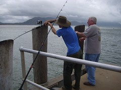 we had to run the fish all the way down the pier so we could pull it out (robstephaustralia) Tags: ocean fishing north australia queensland barra far cooktown barramundi