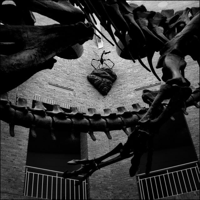 Fernbank Museum of Natural History, 2005