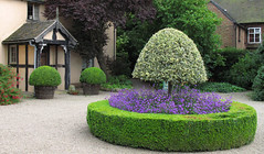 Lolipop Trees (KirscheTortschen) Tags: uk house tree garden topiary purple interestingness205 mywinners wollertonoldhallgarden favoritegarden