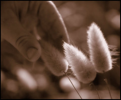 Tiny Hands - Big Wonders (Confused-Hair) Tags: child hand supershot artlibre anawesomeshot superaplus aplusphoto diamondclassphotographer superhearts confusedhair tinyhandsbigwonders