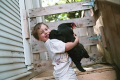 truman and mathilda, best buddies (cafemama) Tags: chicken august hen truman mathilda 2007 australorp trumanhanson urbanchicken august2007 urbanchickens