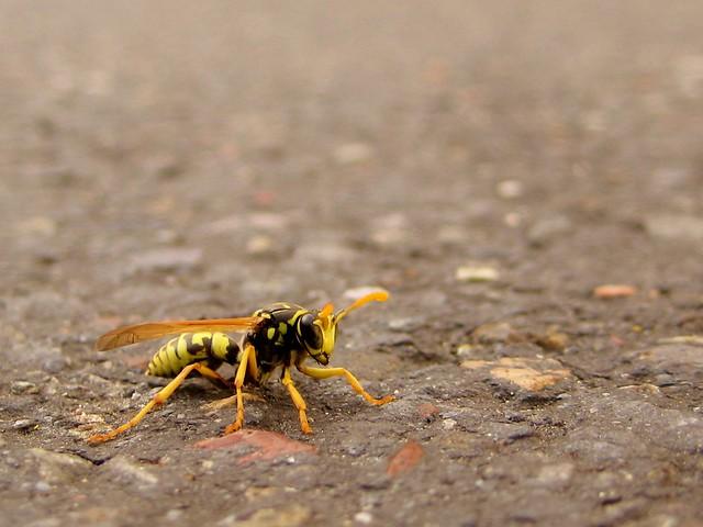 2010-10-18 wasp 003