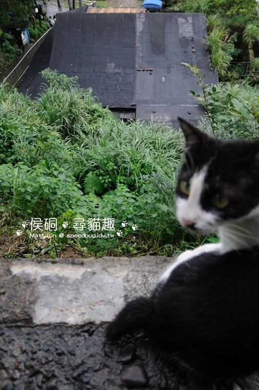 DSC_4691_01.JPG