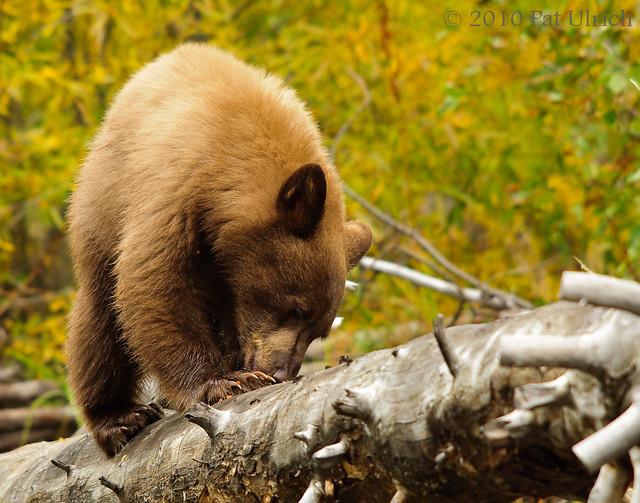 Cub on a log