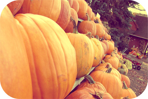 Picture Fall Day 28: The Great Pumpkin