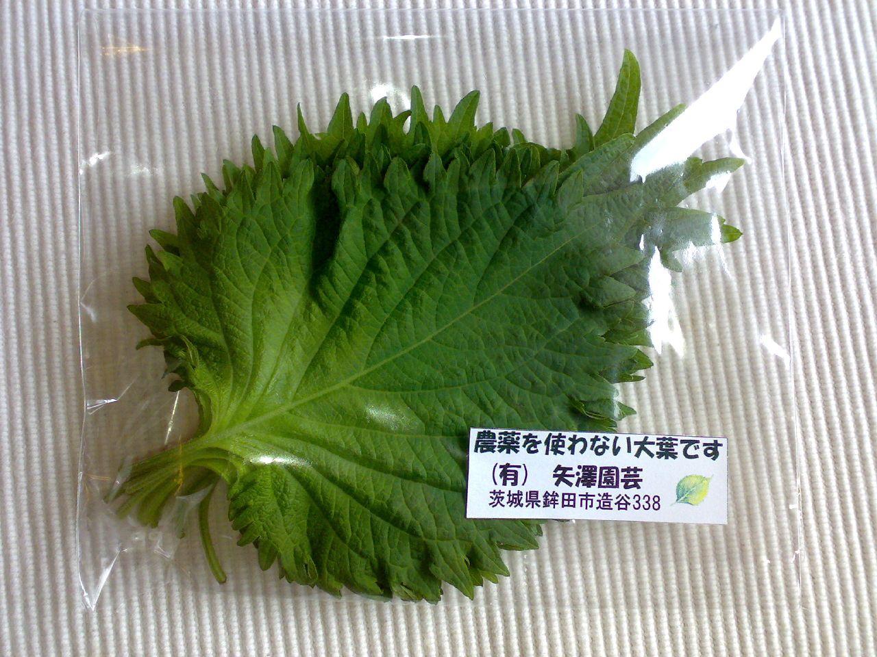 2007/06/28 大葉 ※農薬不使用