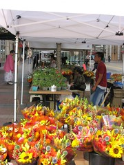 Farmers' Market, Nicollet Mall (Dee Pix) Tags: flowers minneapolis farmersmarkets nicolletmall nicolletave flowerstalls
