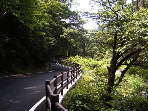 Yamanashi Forest
