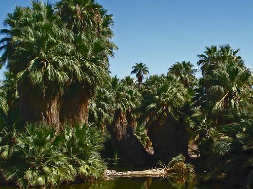 hairy palms.jpg