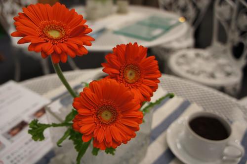 NEX-5 Flower macro