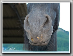 Kiss me baby!!! (Modest Minguella (On/Off)) Tags: horse caballo kiss girona beso modest cavall lagarrotxa pet efs1855is canoneos500d hostaletsdenbas