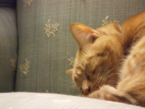 Hoser Sleeping