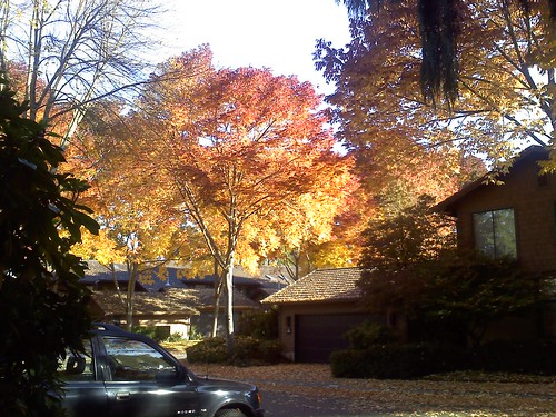 Fall Color in Stendall Place