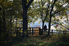 Fence Sitting (kh1234567890) Tags: trees man tree fence sitting pentax 50200mm wr k7 chorltonwaterpark smcpda50200mmf456edwr smcpentaxda50200mmf456edwr