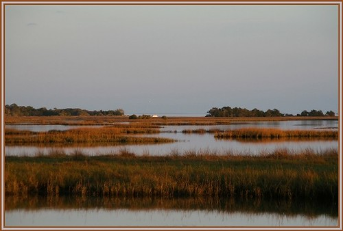 Cedar Key Horizon