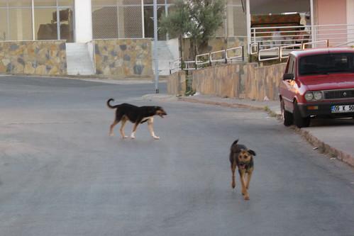 Stray Dogs, Kusadasi