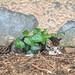 Kätzchen im Versteck