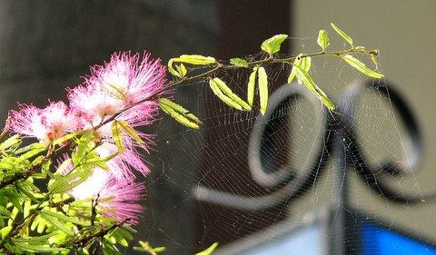 floral website basavanagudi 280907