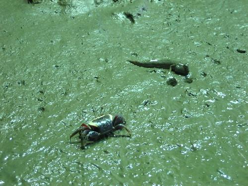 Hermit Crab and Mudskipper