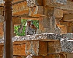 Tender Moments Amid Hard Stones (angshu0105) Tags: india photographer stones excellent monkeys awards framing andhrapradesh lepakshi superbmasterpiece diamondclassphotographer flickrdiamond