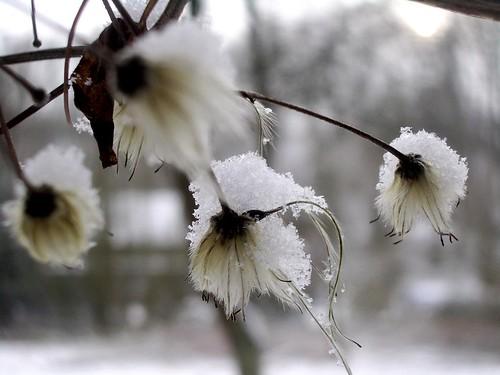 White Fuzzy