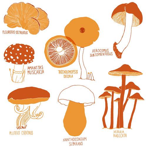 Mushroom Tea Towel Design
