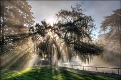 Misty Morning at the Park (TT_MAC) Tags: park sunrise landscape victoriabc sunbeams beaconhillpark rockpaper