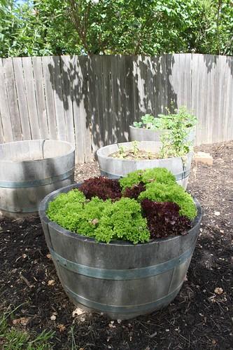 Lettuce tub