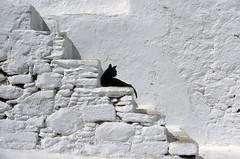 This is not a black and white photo! (ladigue_99) Tags: blackandwhite white black stairs cat 1988 greece gatto mykonos supershot abigfave bestofcats anawesomeshot diamondclassphotographer ladigue99