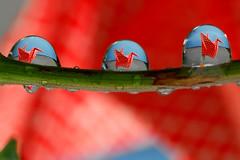 paper crane drops (Steve took it) Tags: macro bravo crane papercrane refraction waterdrops eshu colorphotoaward impressedbeauty ishflickr papercraneproject thepapercraneproject 1000papercrane