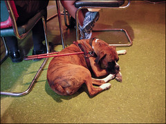 resting service dog