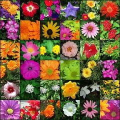 Garden of Flowers Mosaic