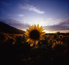 SUNS - by daita