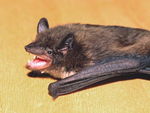 Bat Valdosta Georgia Usa A Photo On Flickriver