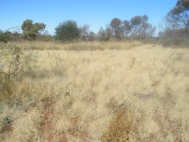Spinifex (3)
