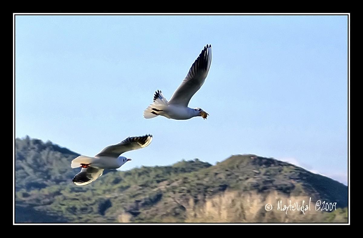 Volando sobre el lago