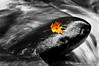Private Idaho (David A Jenkins/ Prime Light) Tags: autumn newyork fall water rocks desaturation catskills slowshutterspeed kaaterskillcreek selectivecoloring greencounty davidjenkins nikond90 delhiggins