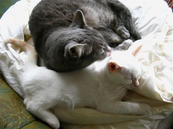 cat love 003